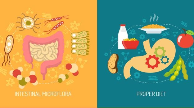 food pharmacy a guide to gut bacteria
